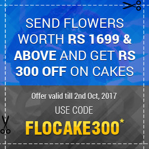 FLOCAKE300